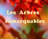 http://arbres-remarquables.forumchti.com/vos-sujets-proposes-f4/